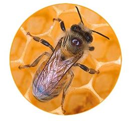Spletno tekmovanje mladih čebelarjev