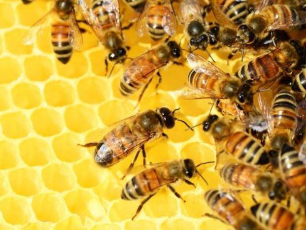 Obeležujemo svetovni dan čebel